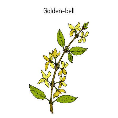 Golden bell forsythia suspensa medicinal plant vector illustration Illustration