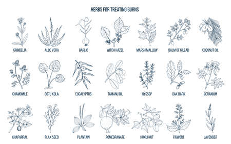 Collection of best herbs for burns treatment
