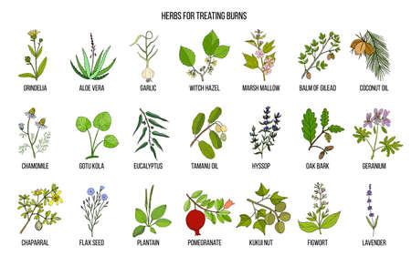 화상 치료를위한 최상의 약초 수집. 약용 식물의 손으로 그린 벡터 세트