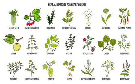 Collection of best herbs for heart disease
