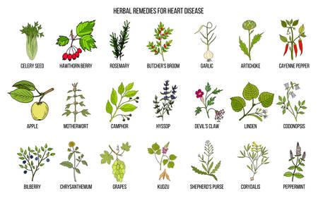 Verzameling van de beste kruiden voor hart-en vaatziekten