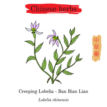 Medicinal herbs of China. Lobelia chinensis