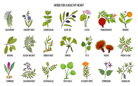 Collection of best herbs for healthy heart Ilustracja