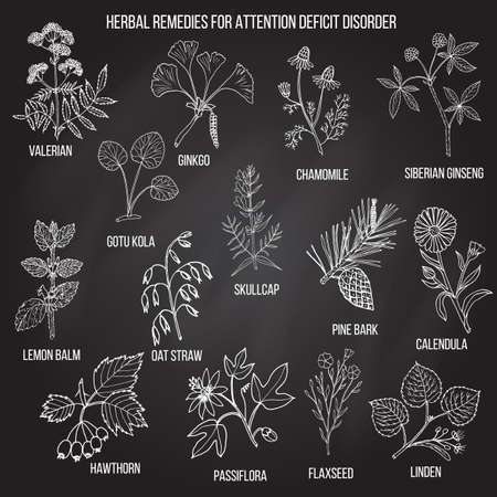 Verzameling van kruiden voor aandachtstekortstoornis. Hand getekend botanische vector set van geneeskrachtige planten