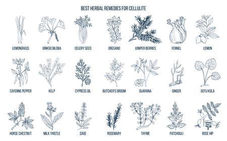 Collection de meilleures herbes pour la cellulite Banque d'images - 95016479