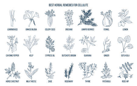 Collection of best herbs for cellulite 矢量图像