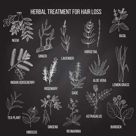 Natural herbs for hair loss treatment. Hand drawn vector set of medicinal plants