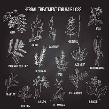 Natural herbs for hair loss treatment. Hand drawn vector set of medicinal plants