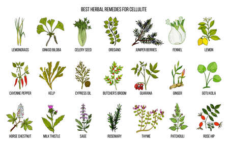 Collection of best herbs for cellulite. Hand drawn vector set of medicinal plants