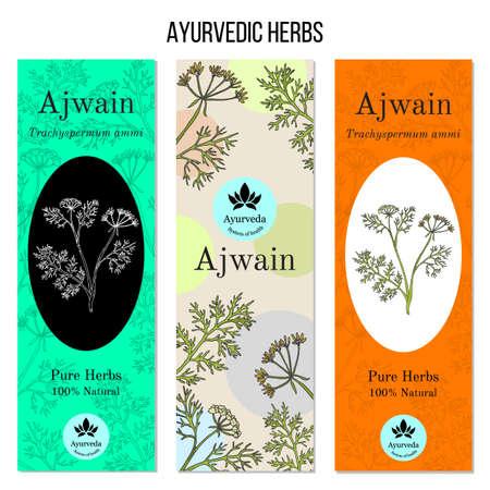 Ayurvedic herbs banners, ajwain Ilustração