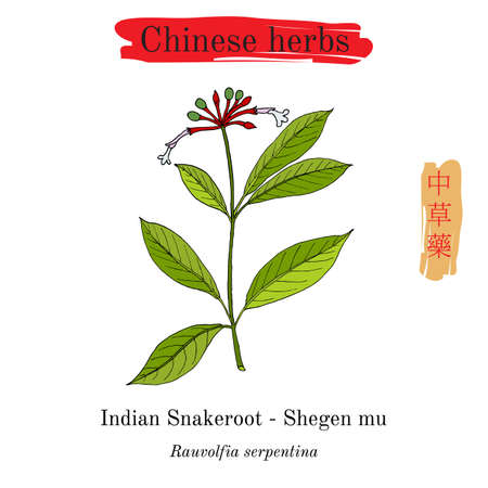 Medicinal herbs of China. Indian snakeroot Rauwolfia serpentina . Hieroglyph translation Chinese herbal medicine