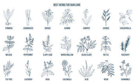 Collection of best herbs for skin care