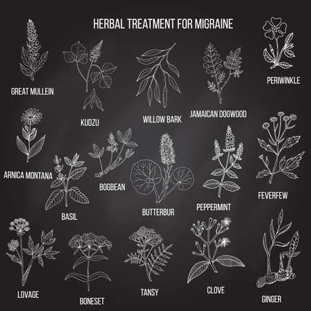 Collection of medicinal herbs for migraines relief. Ilustracja