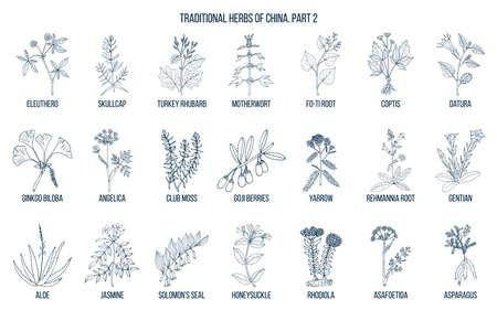 Chińskie tradycyjne zioła lecznicze. Ręcznie rysowane wektor zestaw Ilustracje wektorowe