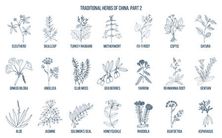 Chinese traditional medicinal herbs. Hand drawn vector set