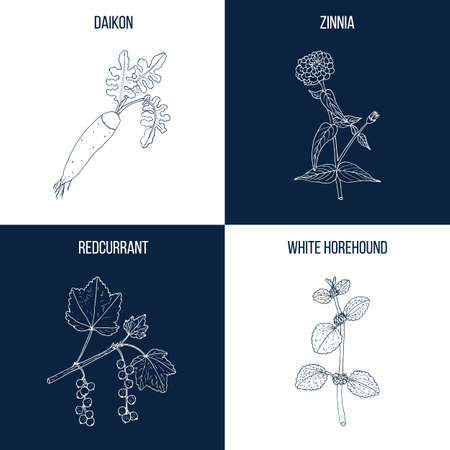 Set of four hand drawn eatable and medicinal plants 일러스트