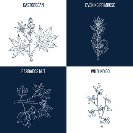 Set of four hand drawn eatable and medicinal plants Ilustrace
