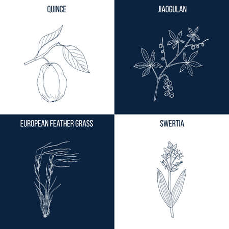 Set of four hand drawn eatable and medicinal plants Vector illustration. Illustration