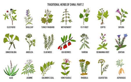 Chinese traditional medicinal herbs illustration