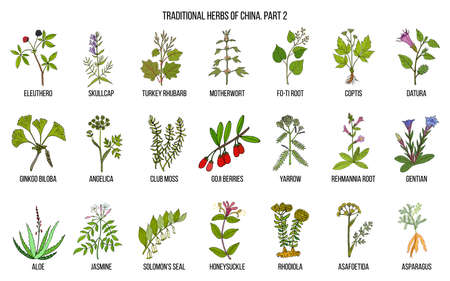 Chinese traditional medicinal herbs illustration