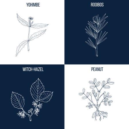 Ensemble de quatre plantes comestibles et médicinales dessinées à la main