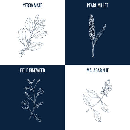 Set of four hand drawn eatable and medicinal plants 矢量图像