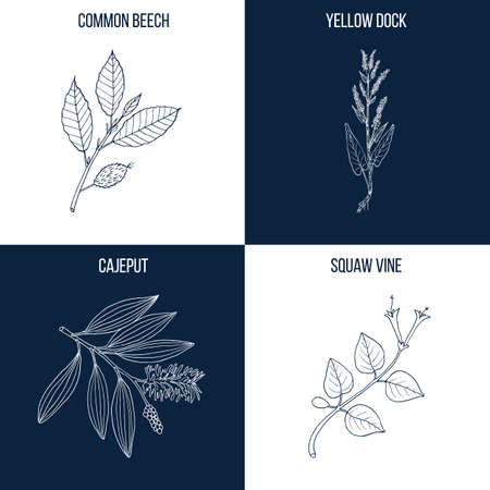 Set of four hand drawn eatable and medicinal plants Vectores
