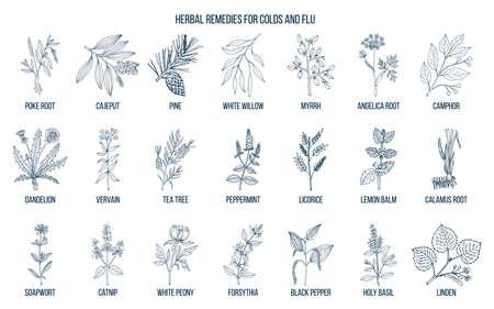Collection d'herbes naturelles pour le rhume et la grippe. Vecteurs