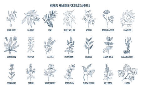 Collection of natural herbs for colds and flu.