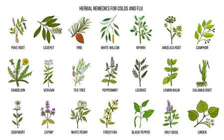 collection d & # 39 ; herbes naturelles pour le rhume et la grippe
