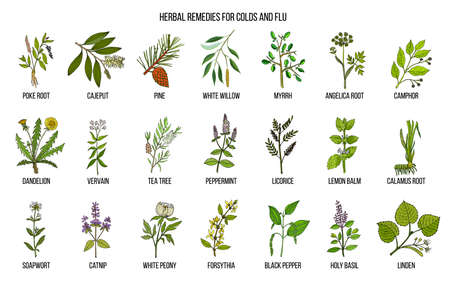 Collection of natural herbs for colds and flu
