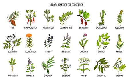 Verzameling van natuurlijke kruiden voor congestie