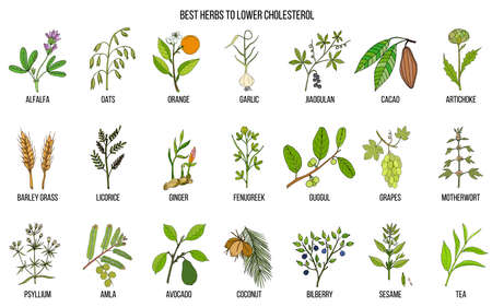 Collection of best herbs for lower cholesterol Vectores