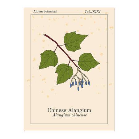 Alangium chinense, medicinal plant
