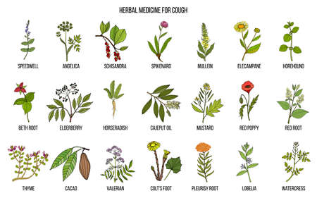 Natural herbs for cough remedies. Hand drawn botanical vector illustration Vettoriali