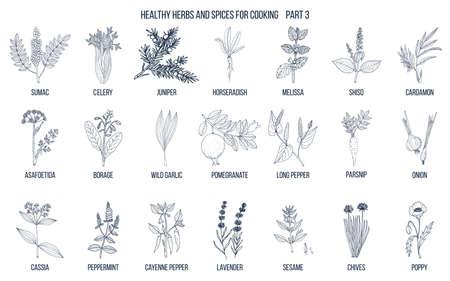 Ręcznie rysowane zestaw ilustracji kulinarnych ziół i przypraw.