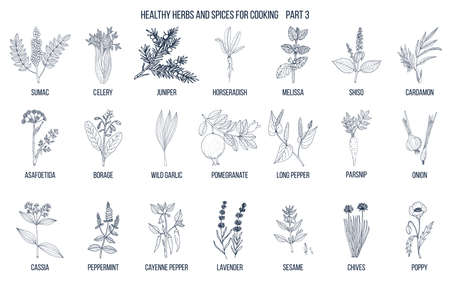 Hand drawn set of culinary herbs and spices illustration.