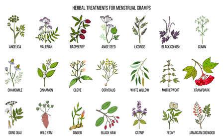 Le migliori erbe per il trattamento dei crampi mestruali