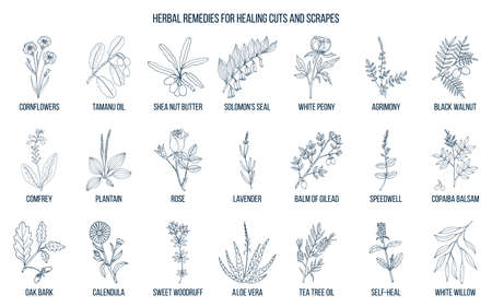 Herbal remedies for healing cuts and scrapes