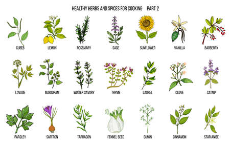 Hand drawn set of culinary herbs and spices Vector illustration.