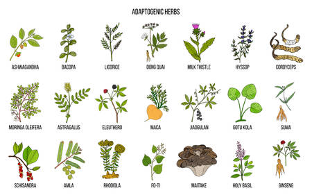 Adaptogen herbs. Hand drawn vector Vettoriali