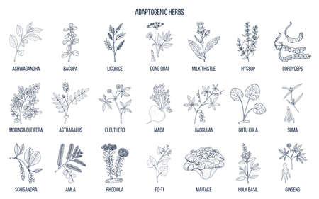 Adaptogen herbs. Hand drawn vector Illustration