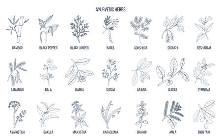 Ayurvedic herbs, natural botanical set.
