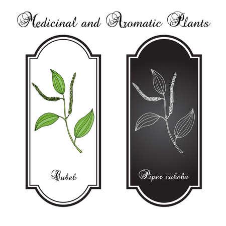 Pepper cubeba, or cubeb, medicinal plant.