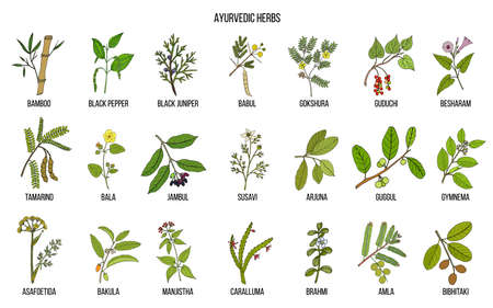 Ayurvedic herbs, natural botanical set. Hand drawn vector illustration