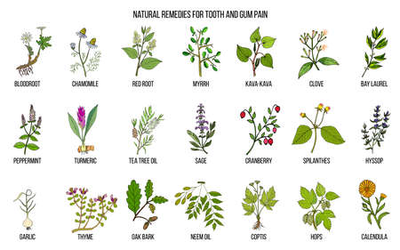 Natural remedies for tooth and gum pain, botanical set