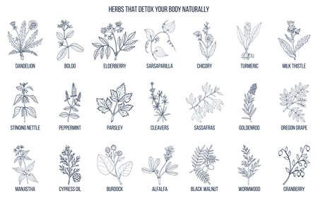 Best herbs for body detox.