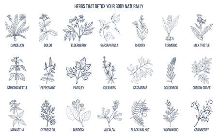 Best herbs for body detox.