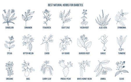 Herbs and spices that fight against diabetes. Hand drawn vector set of medicinal plants