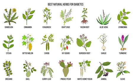 Herbs and spices that fight against diabetes Illustration
